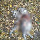 В Ахтубинске орудует потрошитель кошек