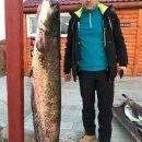 Под Астраханью выловили еще одного сома-гиганта