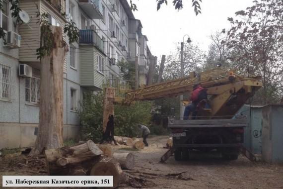 Сухостой в Астрахани будут спиливать по графику