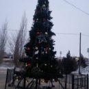 Неказистая елка, насмешившая астраханцев, преобразилась