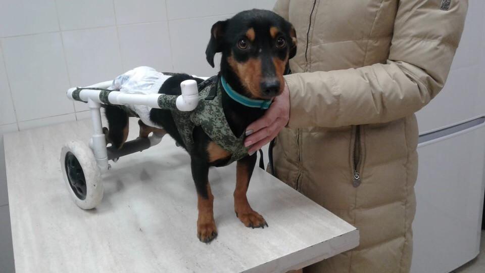 Астраханец спасает собачку с парализованными лапами