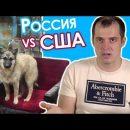 Американец назвал Астрахань столицей бездомных собак