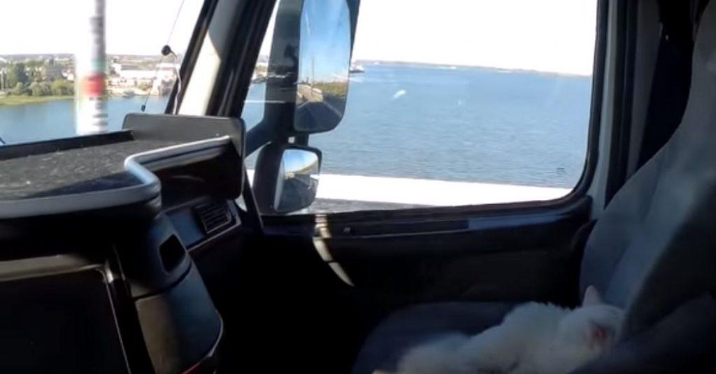 Дальнобойщик, путешествующий с котом, рассказал о поездках в Астрахань
