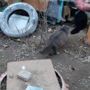 В Астрахани после смерти хозяйки 12 кошек оказались на улице