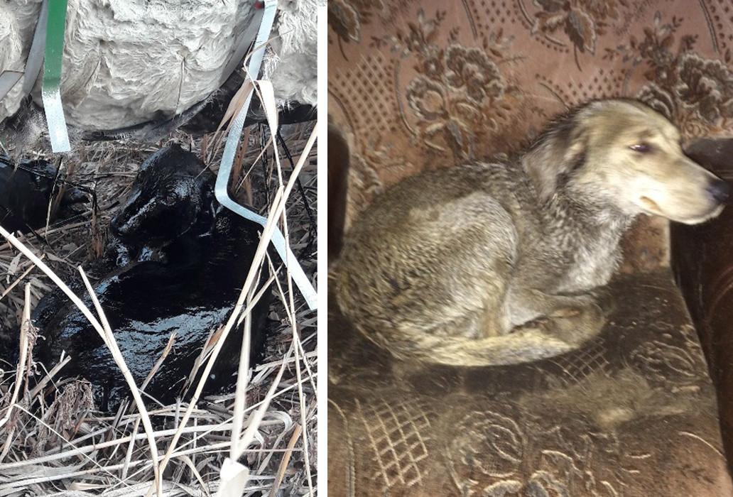 Астраханцы достали собаку из мазутного озера