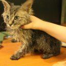 Астраханский подросток показал, как преобразился бездомный кот, попав в семью