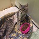 В Астрахани ищут хозяина для кошечки, потерявшей лапку