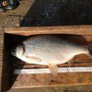 Рыбалка по-астрахански, горящий кот и школьное питание
