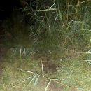 Астраханца, уснувшего на дороге, задавил автомобиль