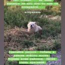 В Астрахани обнаружили бездомную собаку породы чау-чау