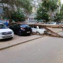 В Астрахани дерево раздавило машину