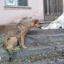 В Астрахани живодеры раскрасили собак