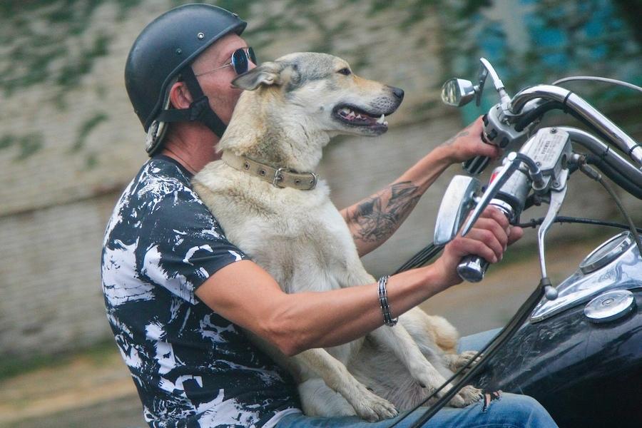 В Астрахани собака-байкер катается по городу на мотоцикле