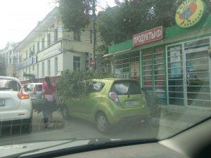 В Астрахани несколько автомобилей пострадали от упавших деревьев