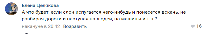 В центре Астрахани сняли на видео гуляющих слонов