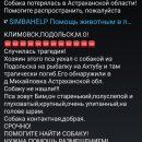 В Астрахани ищут собаку умершего на рыбалке туриста