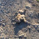 Астраханские волонтеры рассказали, как вороны убивают брошенных щенков
