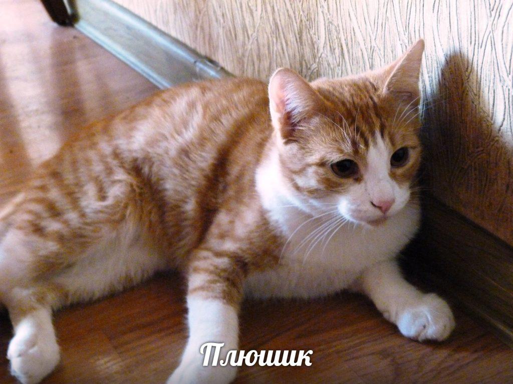 В Астрахани ударили по лицу ветерана, которая кормила кошек