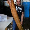 Астраханские рыбаки показали, что можно приготовить из сома-гиганта