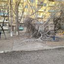 Сухое дерево рухнуло на детскую площадку в Астрахани