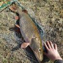 Астраханцы продолжают ловить рыб-гигантов