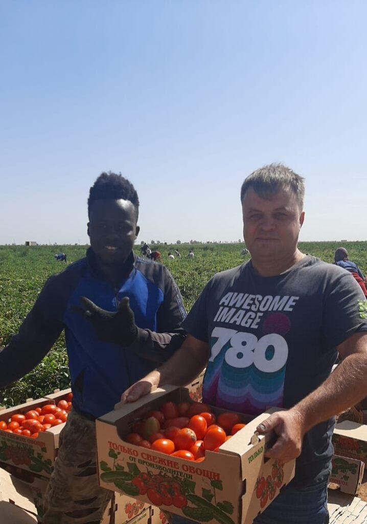 Астраханские фермерши загружают хранилища луком